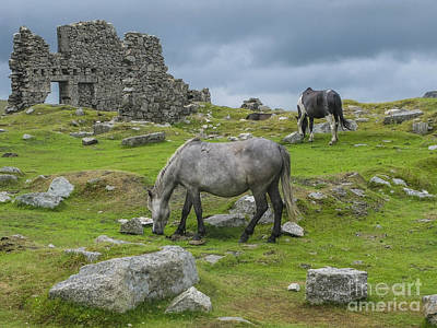Horses On The Moors Of Dartmoor Poster by Patricia Hofmeester