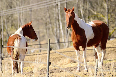 Horses Posing Poster by Tommytechno Sweden