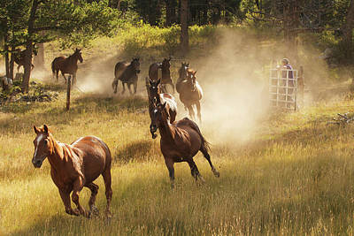 Horses Running Into Pasture In Early Poster by Piperanne Worcester