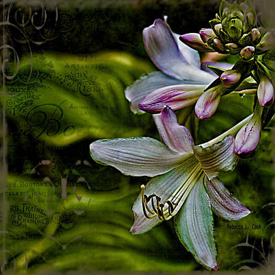 Hosta Lilies With Texture Poster by Bellesouth Studio