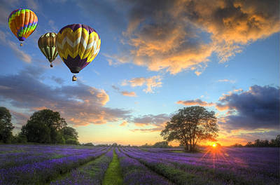 Hot Air Balloons Flying Over Lavender Landscape Sunset Poster
