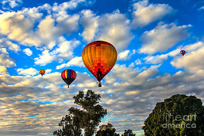 Hot Air Balloons Over Trees Poster by Robert Bales