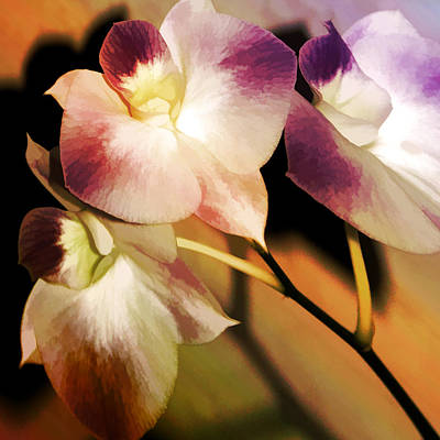 Poster featuring the photograph Hot Orchid Nights by Holly Kempe