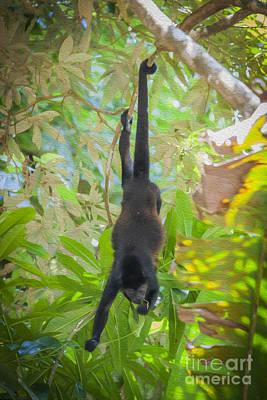 Howler Monkey Eating Poster