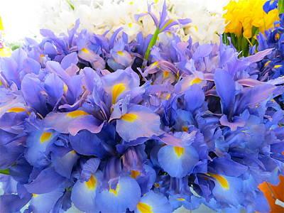 Huddling Iris Poster