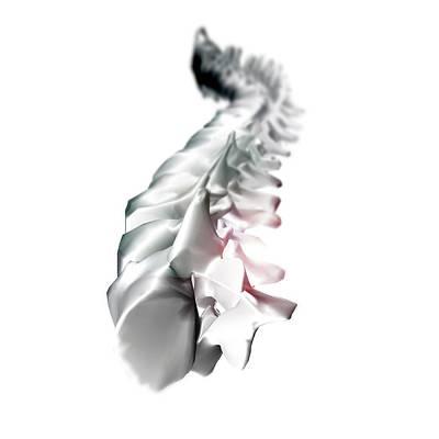 Human Backbone Poster