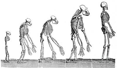 Human Evolution 1883 Poster by British Library