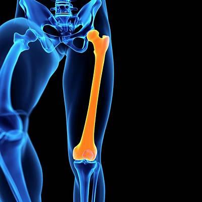 Human Femur Bone Poster by Sebastian Kaulitzki