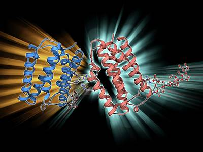 Human Interferon Beta Molecule Poster by Laguna Design