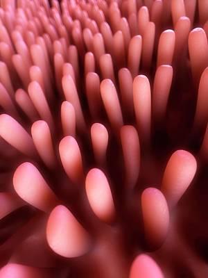 Human Intestinal Lining Poster