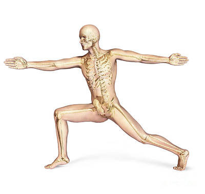 Human Male In Athletic Dynamic Posture Poster