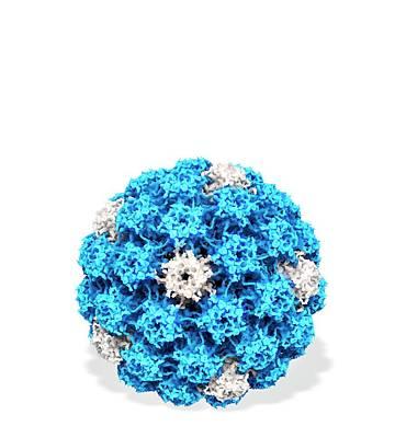 Human Papilloma Virus Particle Poster by Ramon Andrade 3dciencia