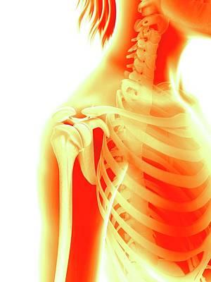 Human Shoulder Joint Poster by Sebastian Kaulitzki
