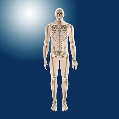 Human Skeleton Poster by Springer Medizin