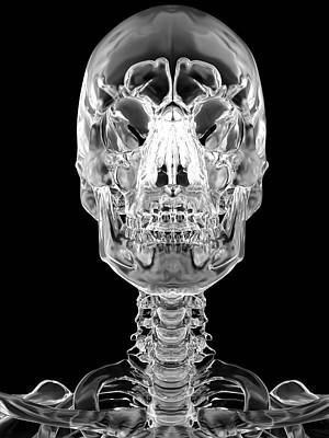 Human Skull Poster by Sciepro