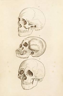 Human Skulls Poster