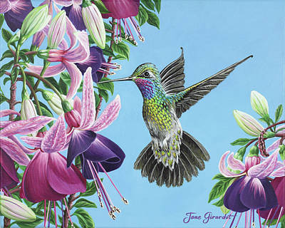 Hummingbird And Fuchsias Poster