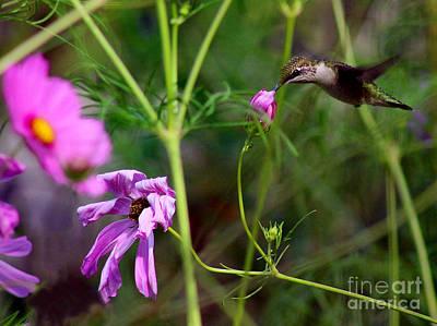 Hummingbird In Garden Poster by Karen Adams