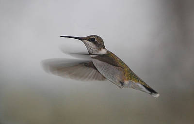 Poster featuring the photograph Hummingbird  by Leticia Latocki