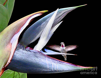Poster featuring the photograph Hummingbird Paradise by Jennie Breeze