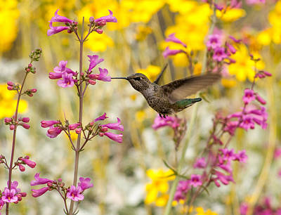 Hummingbird Paradise Poster