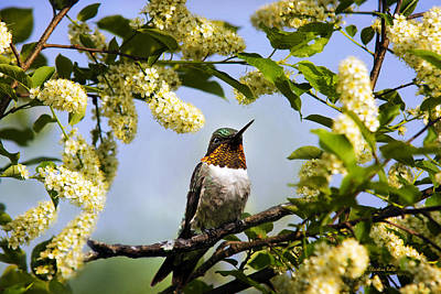 Hummingbird With Flowers Poster by Christina Rollo
