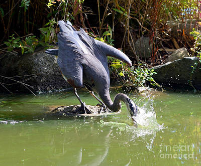 Hungry Great Blue Heron Poster by Terry Elniski