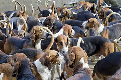 Hunter Hounds Dogs Background Poster