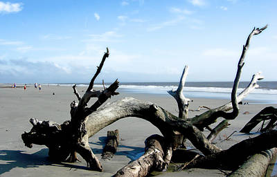 Poster featuring the photograph Hunting Island - 2 by Ellen Tully