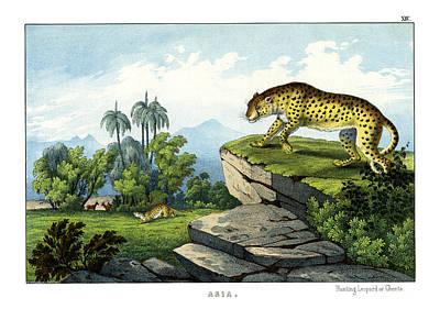 Hunting Leopard Poster by Splendid Art Prints