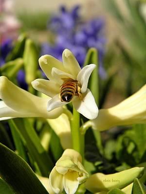 Hyacinth And Honeybee Poster