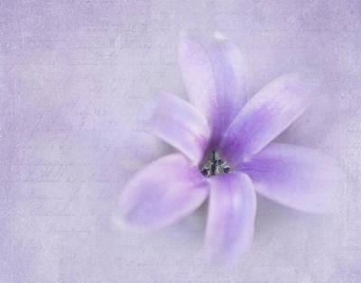 Hyacinth V Poster by David and Carol Kelly
