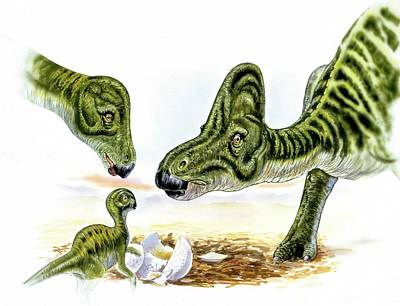 Hypacrosaurus Dinosaurs And Young Poster