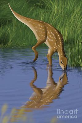 Hypsilophodon Drinking Water Poster by Michele Dessi