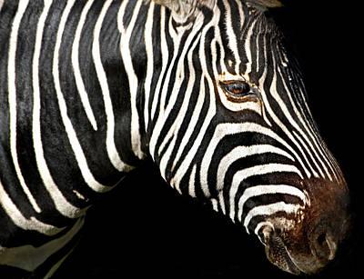 I Am A Zebra Poster