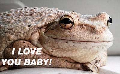 Frog Declaration Of Love Poster