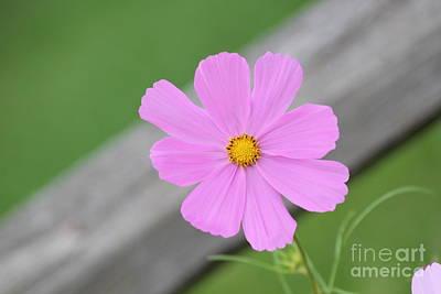 I Love You Flower Poster