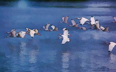 Poster featuring the photograph Ibis In Flight by Pamela Blizzard