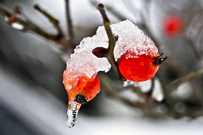 Poster featuring the photograph Ice Berries by Crystal Hoeveler