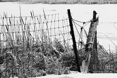 Ice Coated Wire Fence And Rushes After A Winter Storm Poster by Louise Heusinkveld