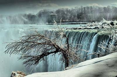 Ice Covered Tree Poster