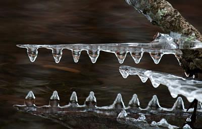 Ice Crocodiles Poster by Lara Ellis