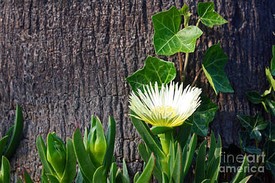 Ice Flower With Vine Poster