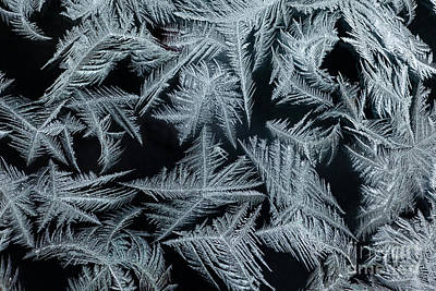 Ice-flowers Frost Pattern Tracery On Frost Window Poster