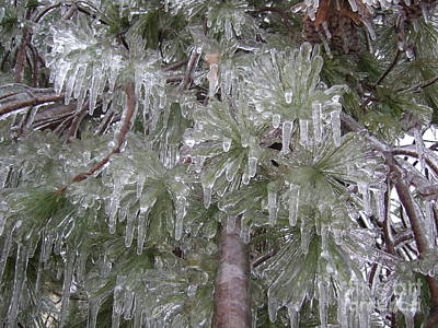 Poster featuring the photograph Ice Pine by Deborah DeLaBarre