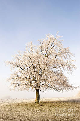 Iced Tree Poster