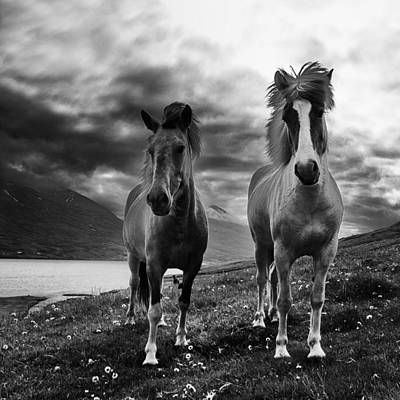 Icelandic Horses Poster by Frodi Brinks