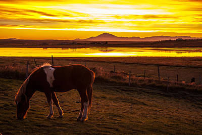 Icelandic Sunrise Poster