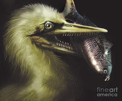 Ichthyornis Portrait With Fish In Mouth Poster by Jan Sovak