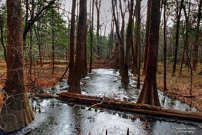 Icy River In The Bottomland Forest Poster